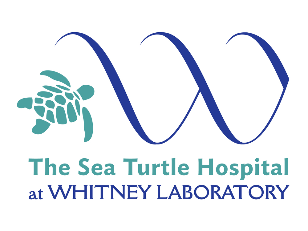 SeaTurtleHospital-Logo-Teal.jpg