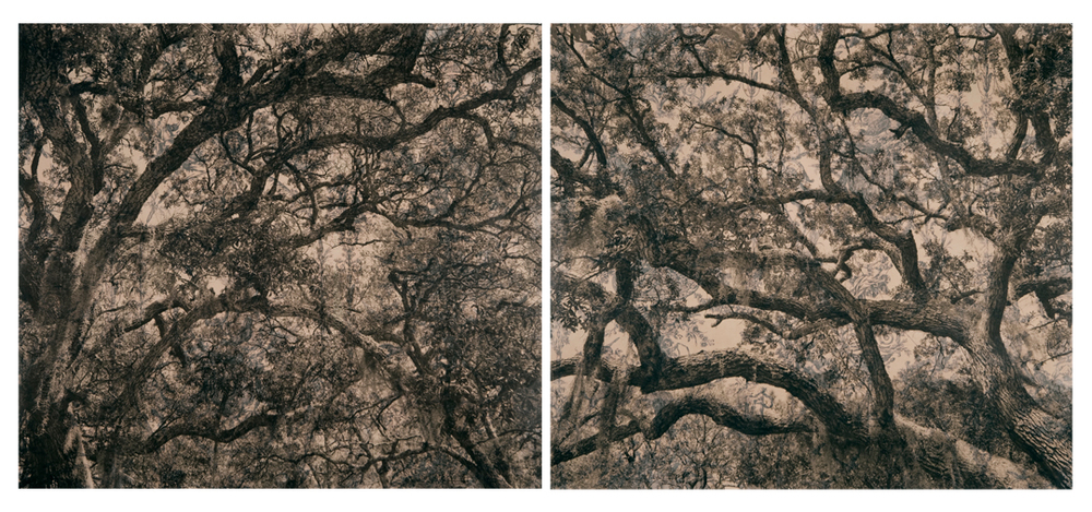 "Live Oak Toile Diptych,  2010   Digital pigment print on kozo shi, wallpaper, wax   30"" x 74"""