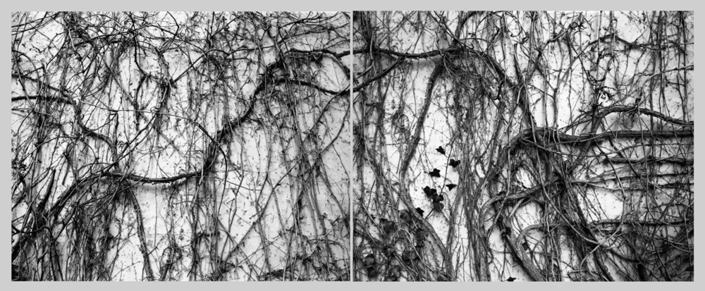"Park Avenue Vine Diptych, 2009   Digital pigment print on kozo shi   40"" X 100"""