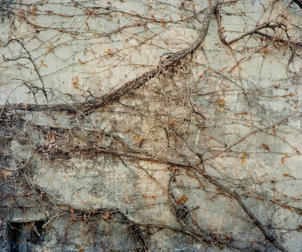 "Providence Vines II,  2010   Archival pigment print on kozo shi, wallpaper, wax   22"" X 26"""