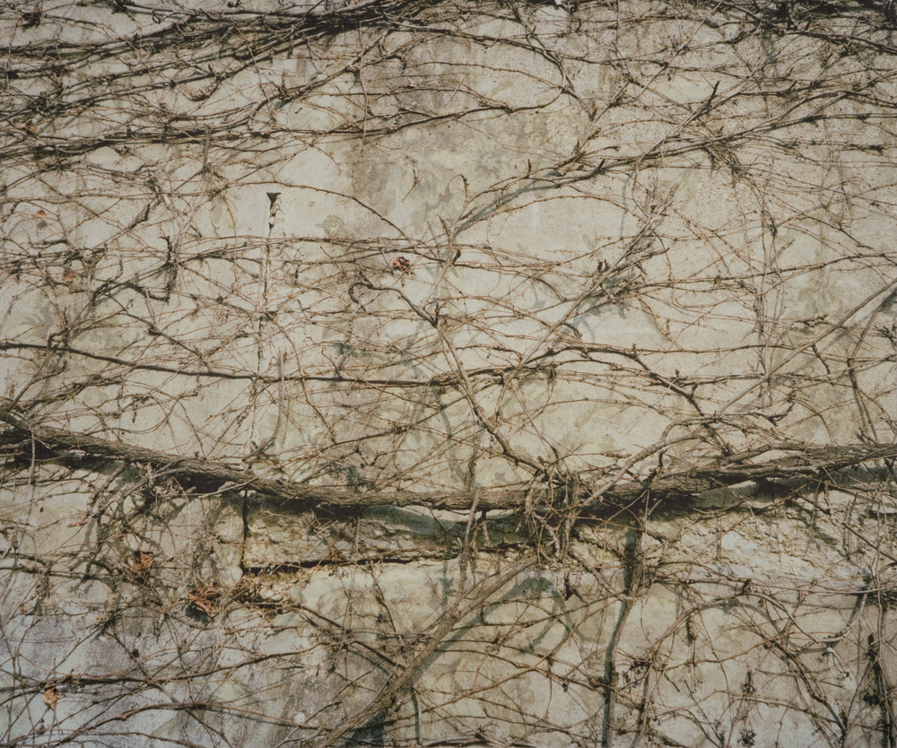 "Providence Vines V,  2010   Archival pigment print on kozo shi, wallpaper, wax   22"" X 26"""
