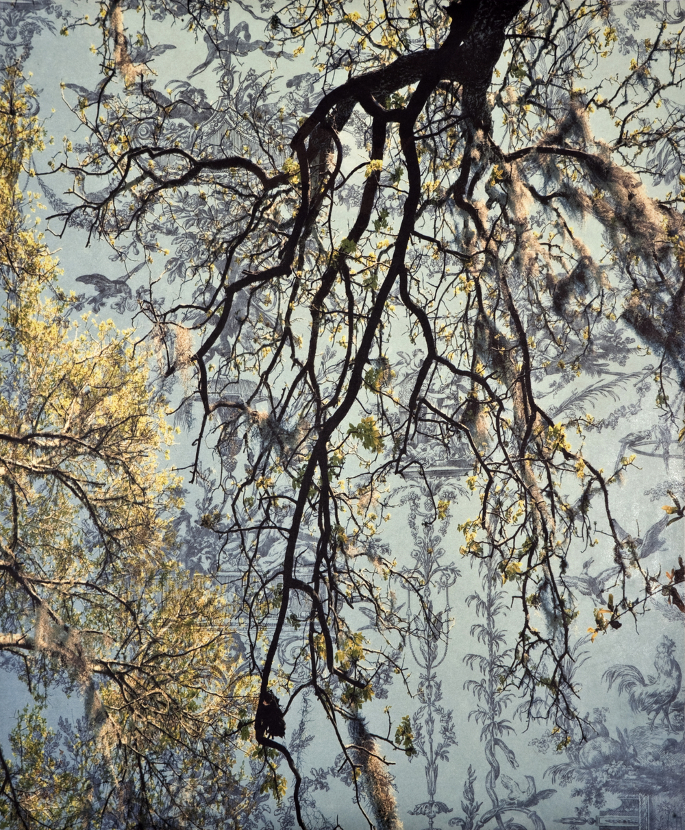 "Spanish Moss Toile II,  2010   Archival digital pigment print on kozo shi, wallpaper, wax   24"" X 20"""