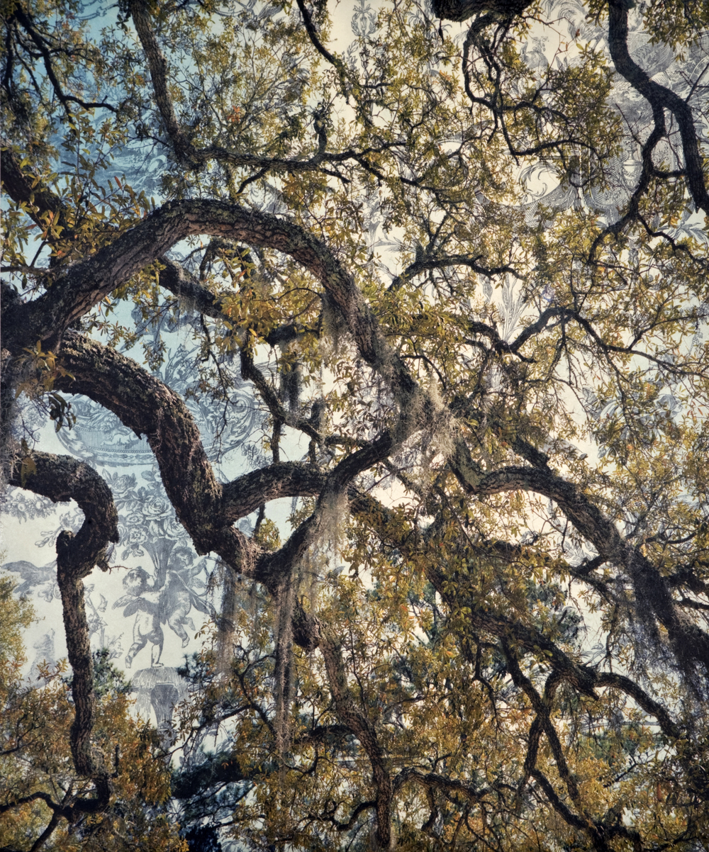 "Spanish Moss Toile I,  2010   Archival digital pigment print on kozo shi, wallpaper, wax   24"" X 20"""