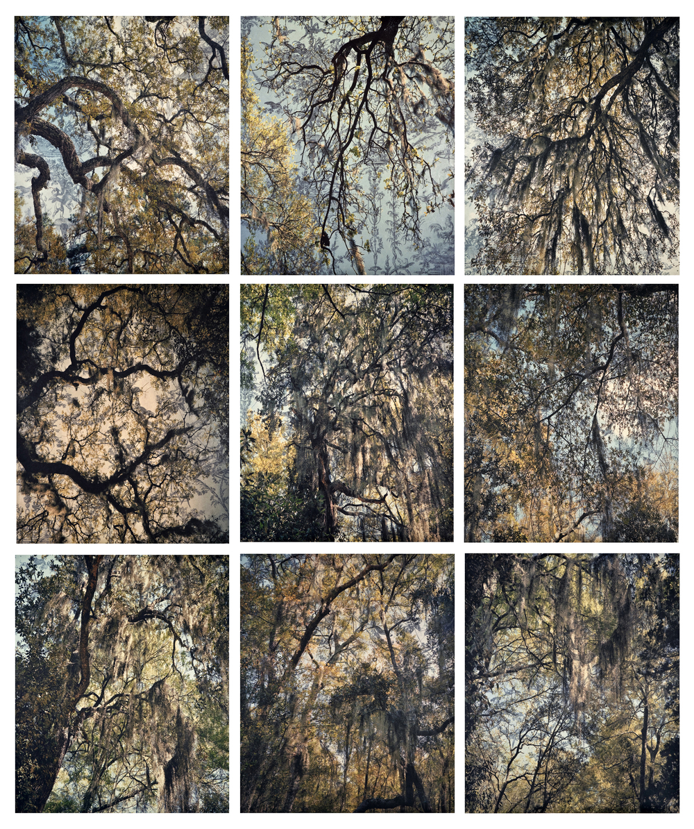 "Spanish Moss Toile Grid,  2010   Archival digital pigment print on kozo shi, wallpaper, wax, 9 - 24"" X 20""   78.5"" X 66.5"""