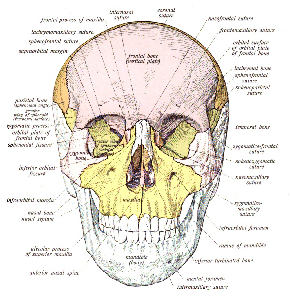 Initial Evaluation and Management of Maxillofacial Injuries ...