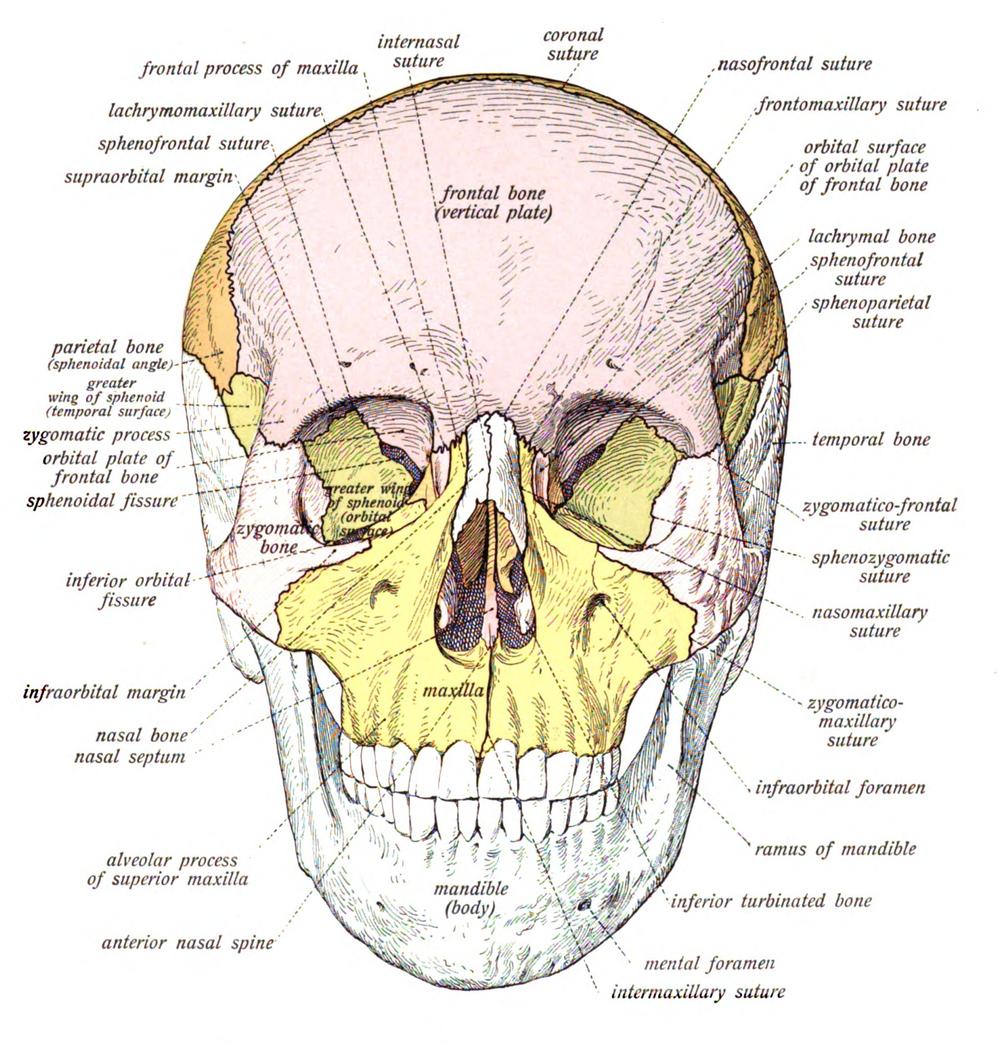 Antibiotics for Facial Fractures — Taming the SRU