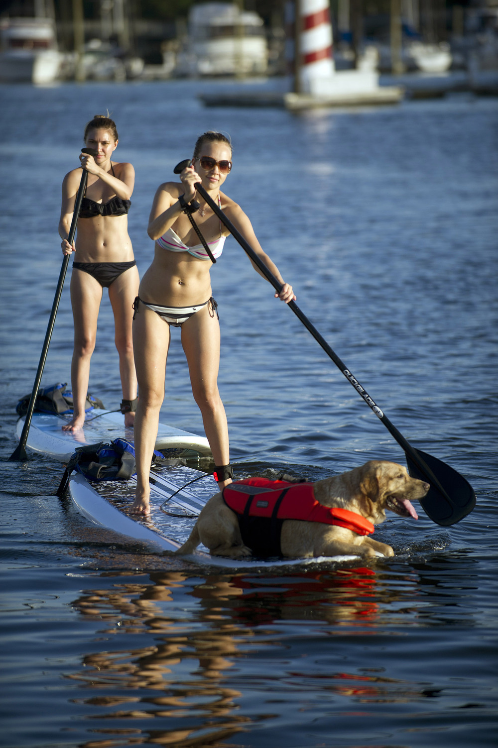 Natalie Titova Campos, her dog, Kenbol, and Alena Matveeva use paddleboards rented from Young Mariners at Harbor Point on Friday, July 5, 2013.