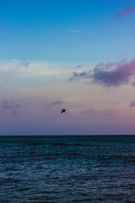 pelican_nest_aruba
