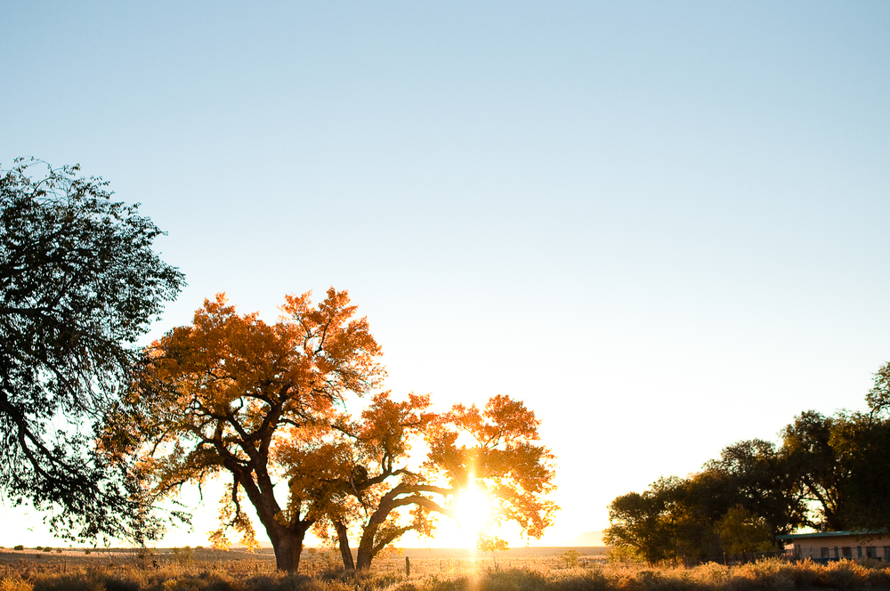 Fall Cottonwoods at Sunrise  , San Fidel, NM