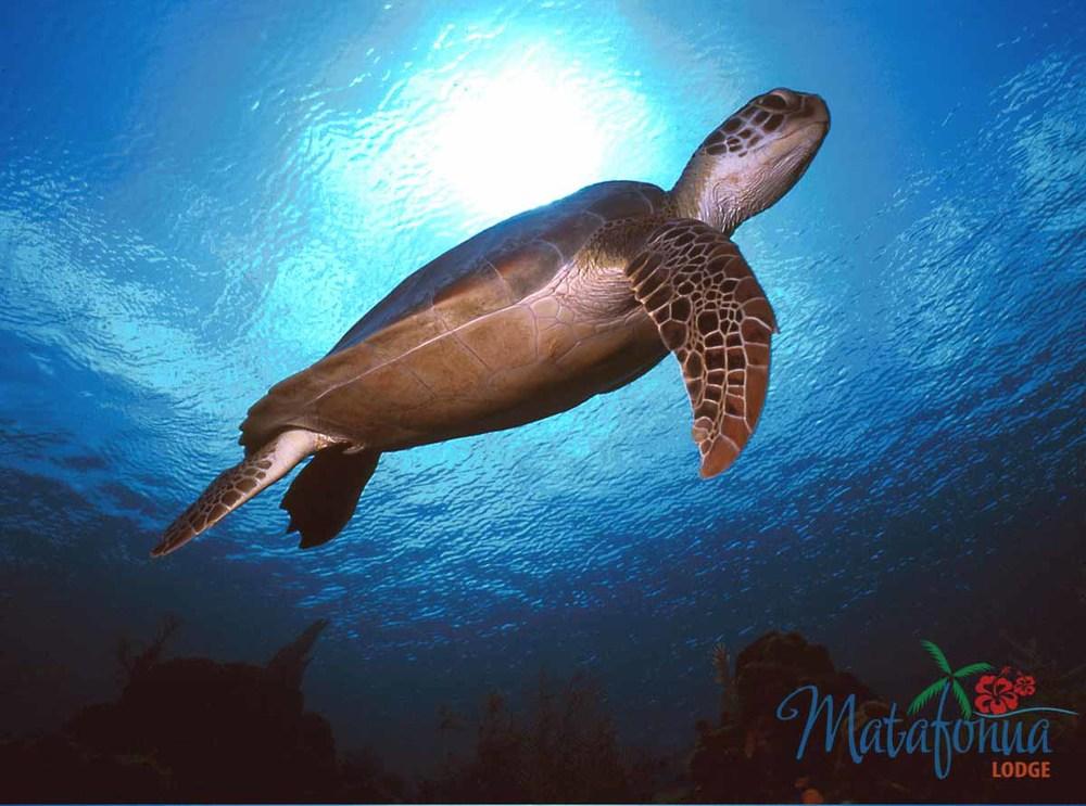 Underwater_00000581.jpg