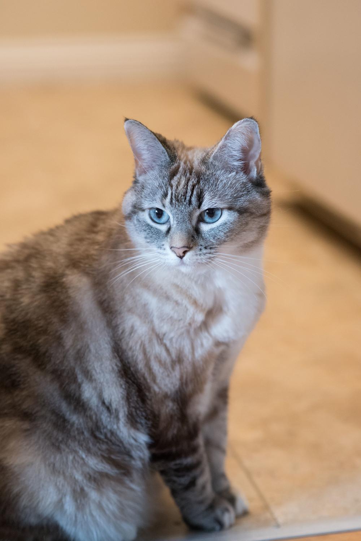 Nikon D750 Test Shot Cat Photo