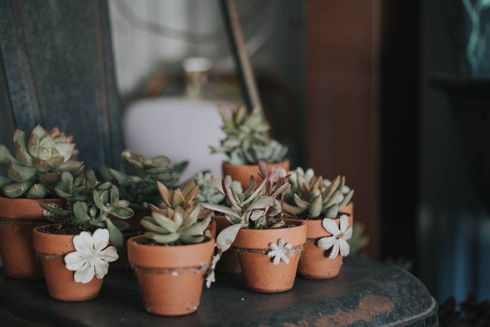 How adorable are these little succulent planter favors?!