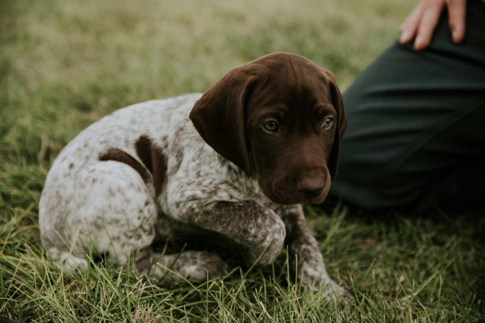 Puppy-4.jpg