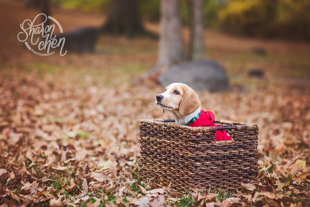 Puppy's five seconds in the basket.