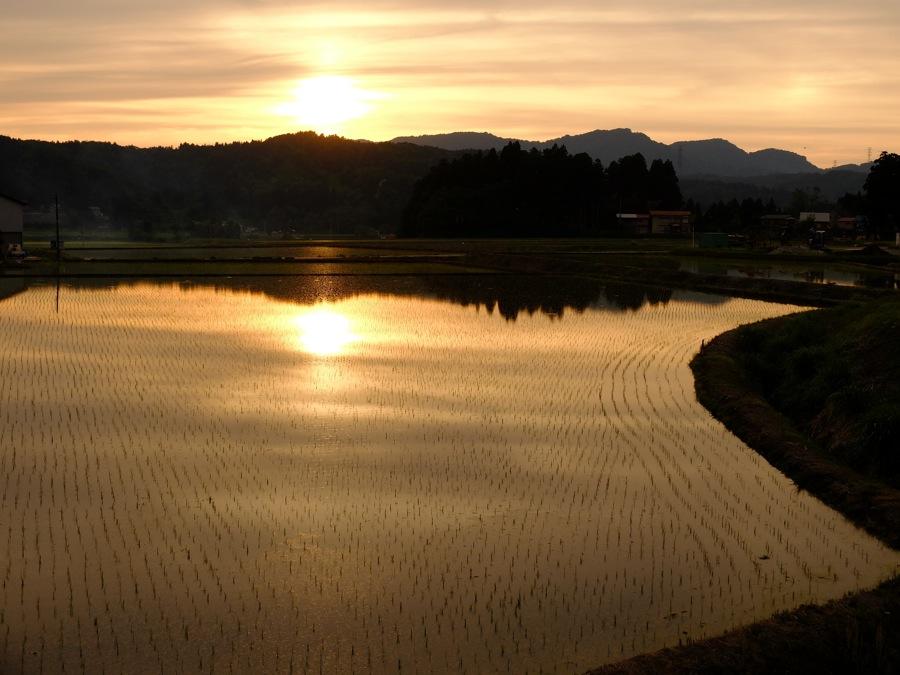 rice field .jpg