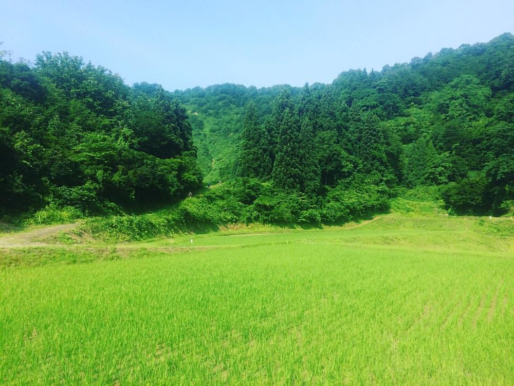 Lots of green around the course of Echigo