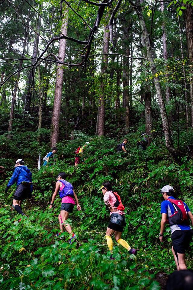 Hakuba forest.JPG