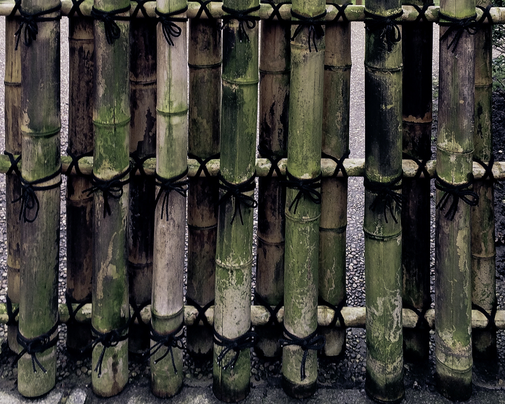 bamboo fence in Kyoto Garden, London