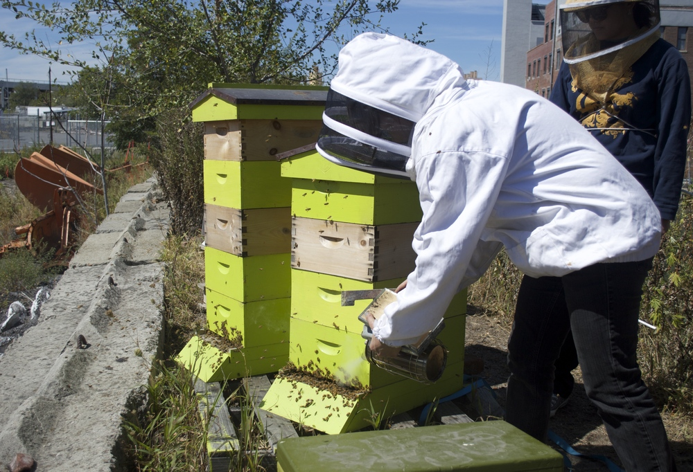 gowanus-conservancy-bee-hives-1.jpg