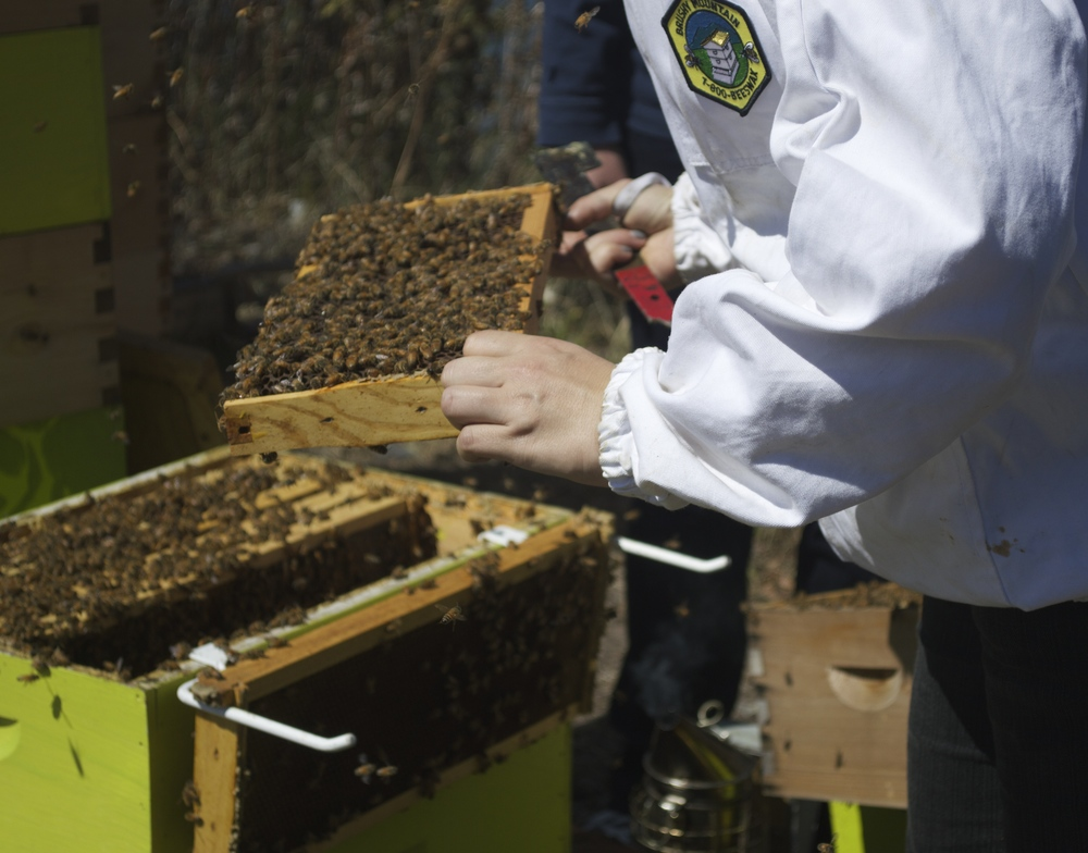 beekeeper kimberly rubin pulls frames out of a hive to show to the group.