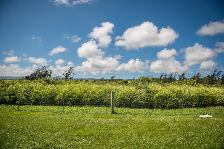 Hawi Landscape