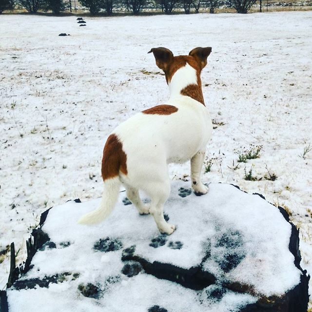 First time in snow.