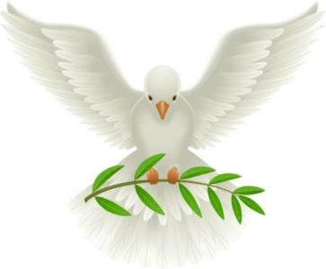 dove-branch.jpg