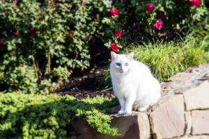 White Cat in a Garden
