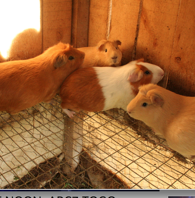 """We're Guinea Pigs. Greetings, internet."""