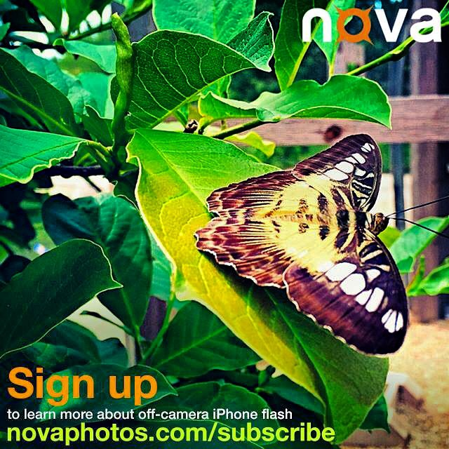 Sign up to learn more about off-camera iPhone flash #NovaFlash #iphoneography #mobilephotography #iphonephotography