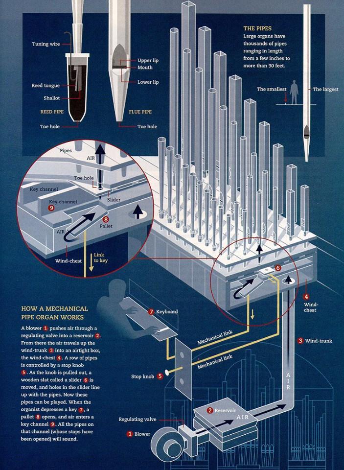 Organ schematic