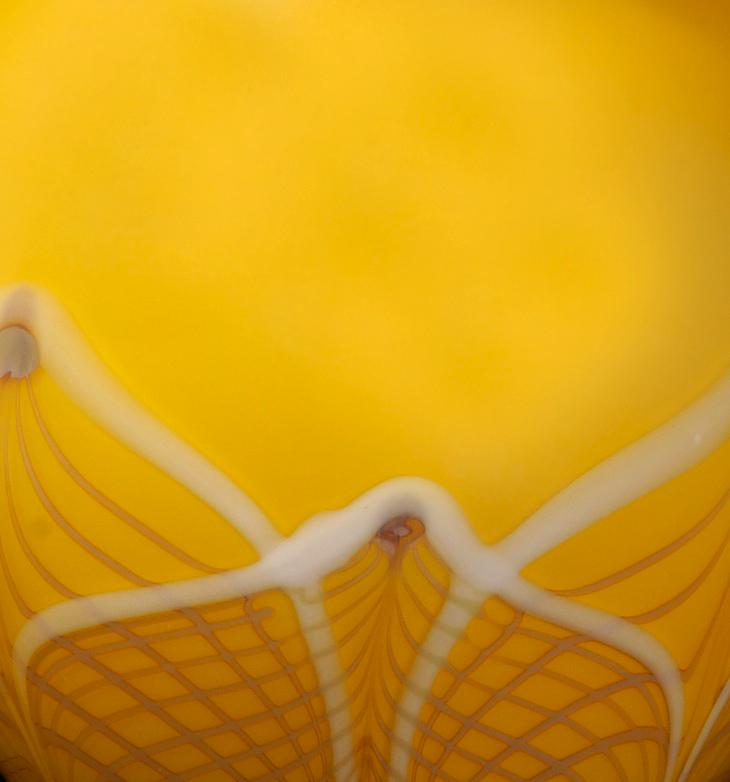 lemon Lace close up
