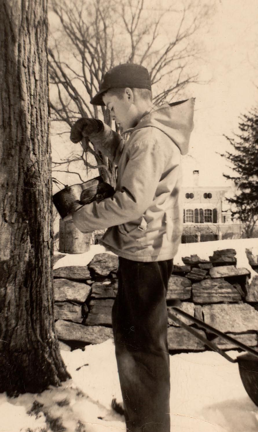 Christopher Smith, c. 1946, tapping a maple tree on Mead Street for syrup.  The Studwell House is in the background.