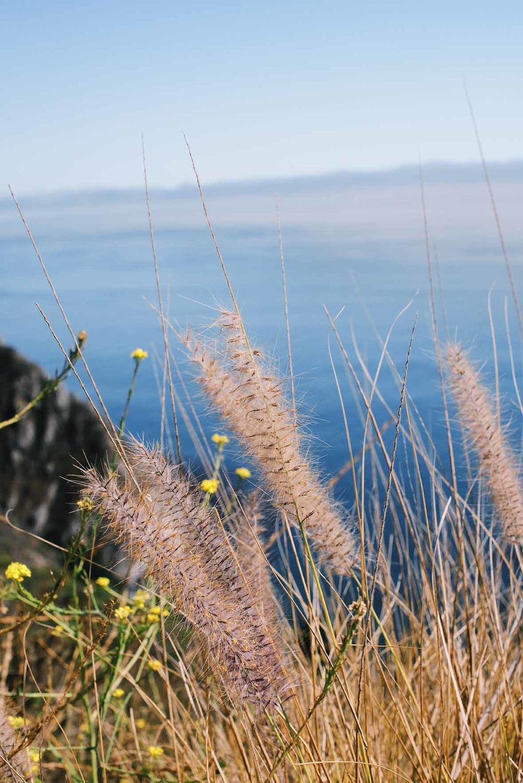 Big Sur. CA |A Brown Table