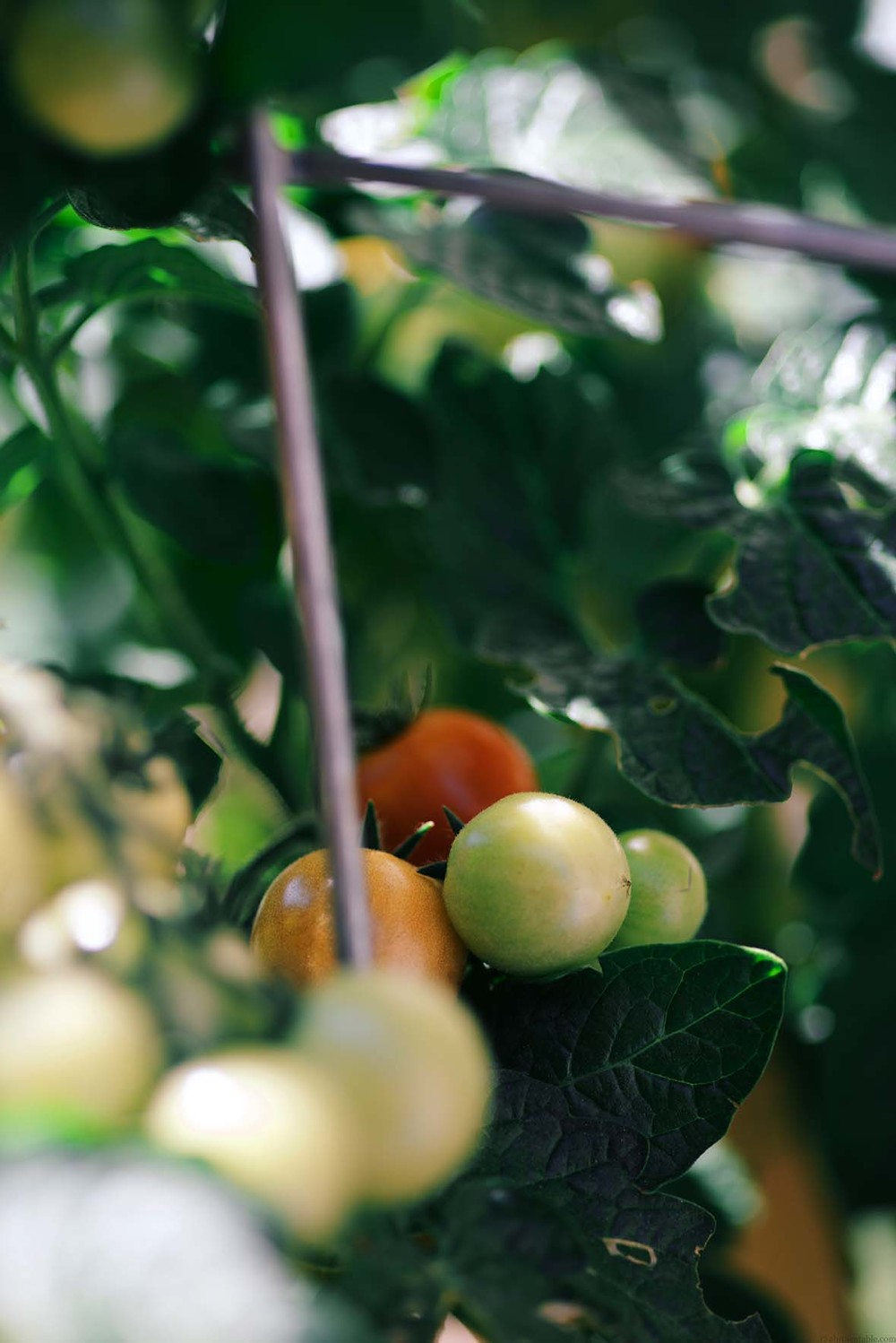 cherry tomatoes | A Brown Table