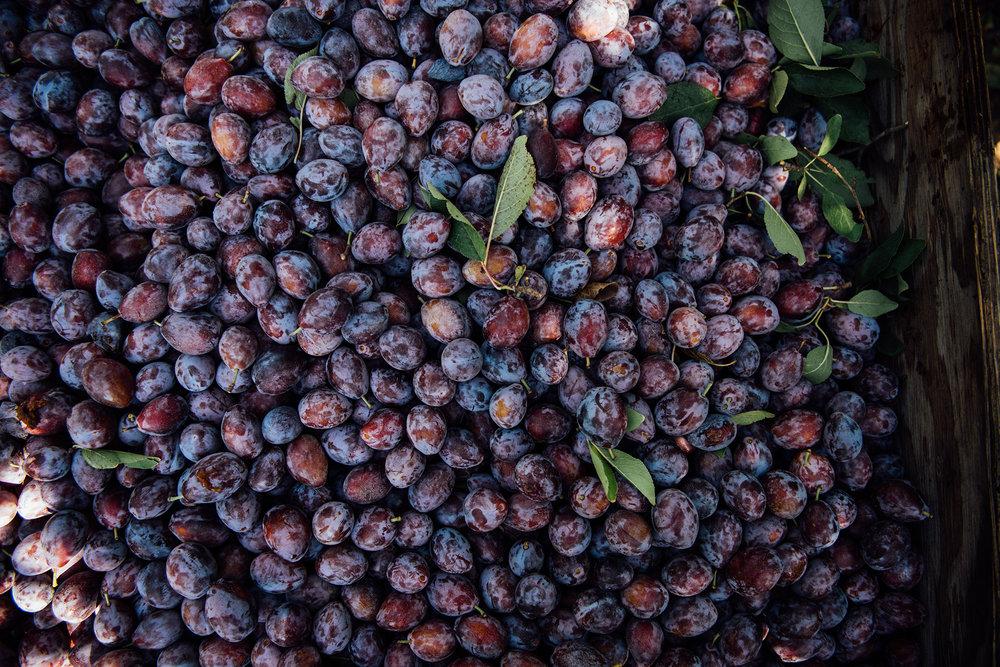 spiced california prunes couscous | Nik Sharma