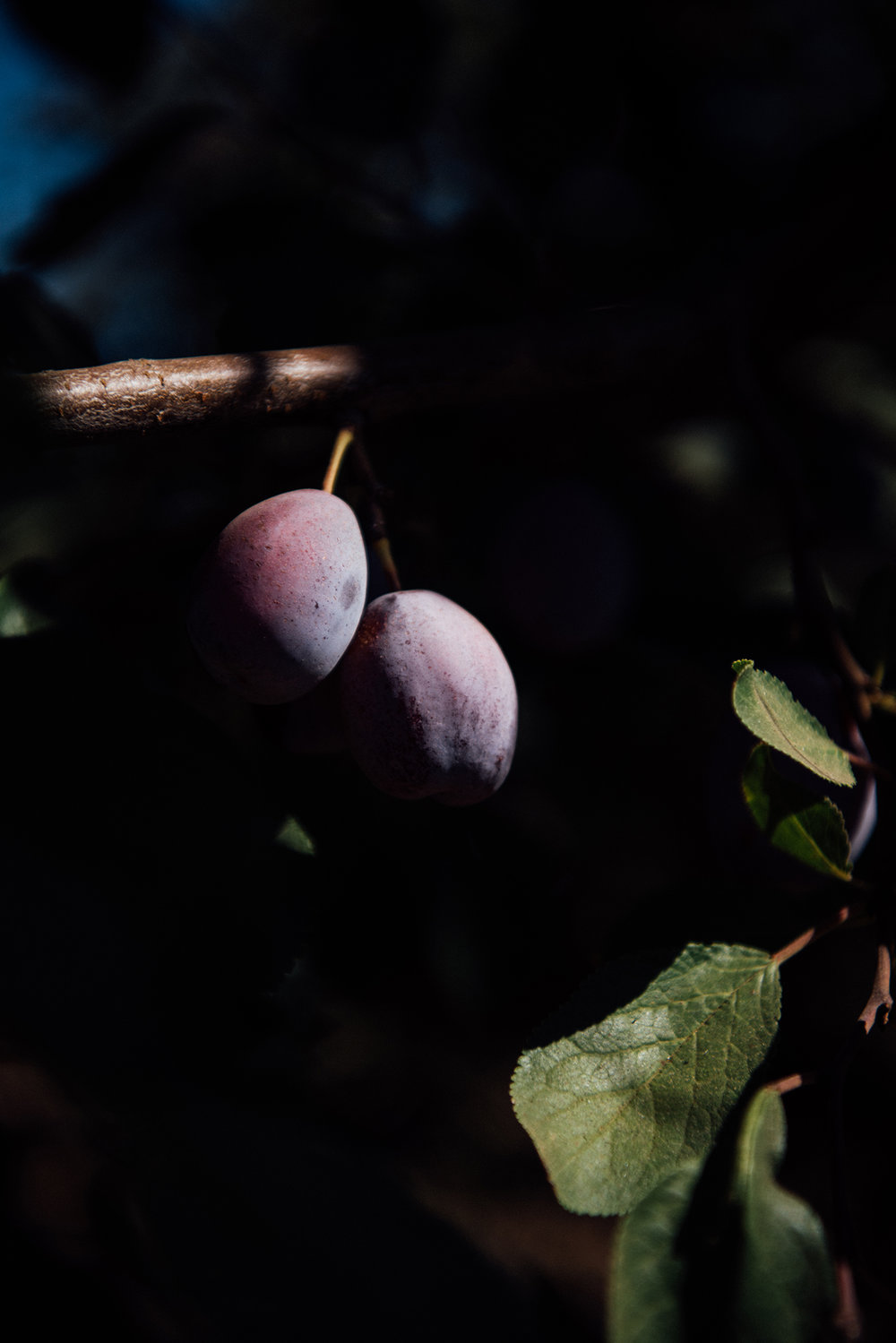 Images Of California Prunes
