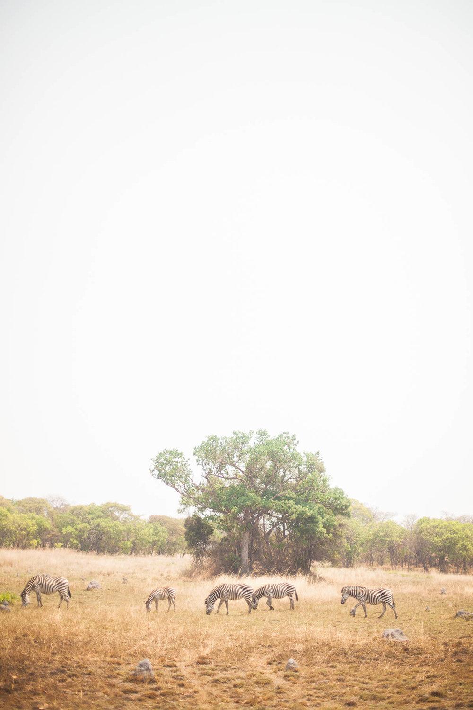 cassandra.dunning-483.jpg
