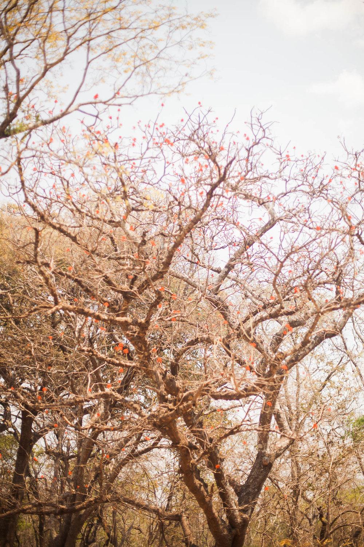 cassandra.dunning-507.jpg