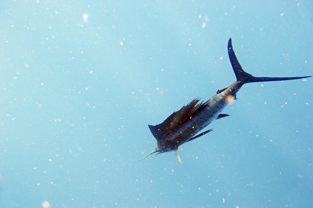 UA_FISH_RELEASE.jpg