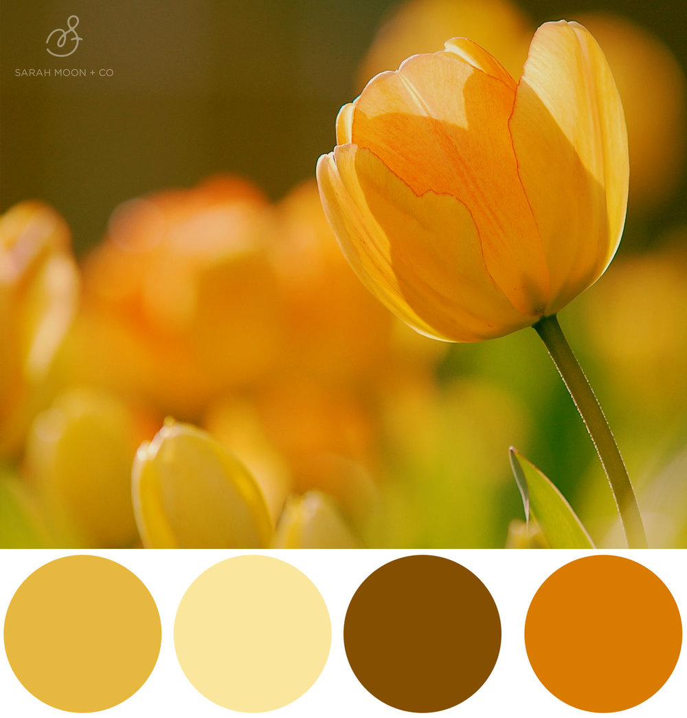 Sunny Tulip Tones