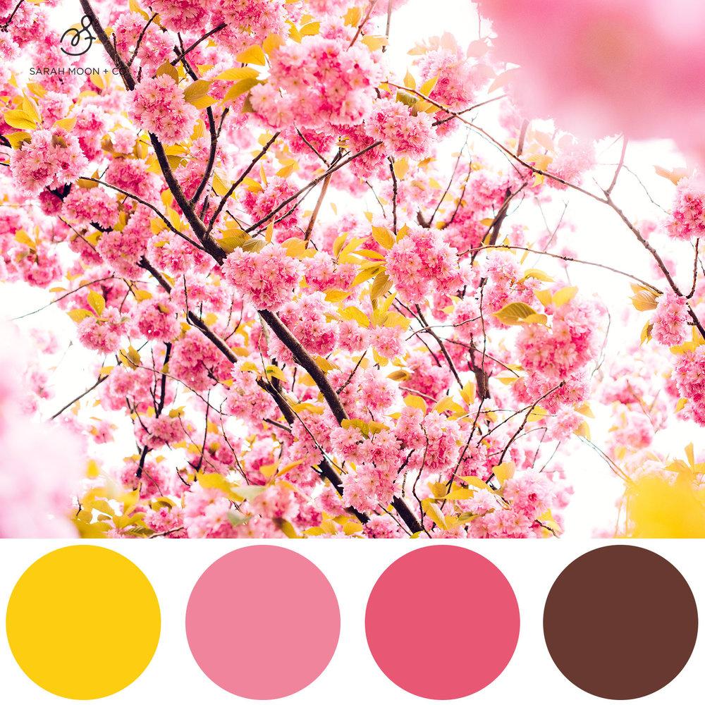 pinkblossoms.jpg