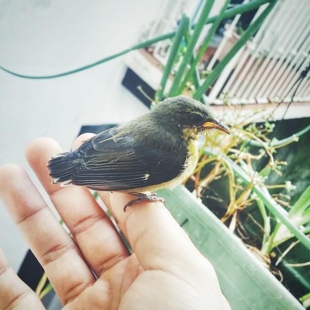 Pajariendo con un pájaro que tiene el síndrome Estocolmo. #viejosanjuan #puertorico #tropicaleo #pajaro #bird