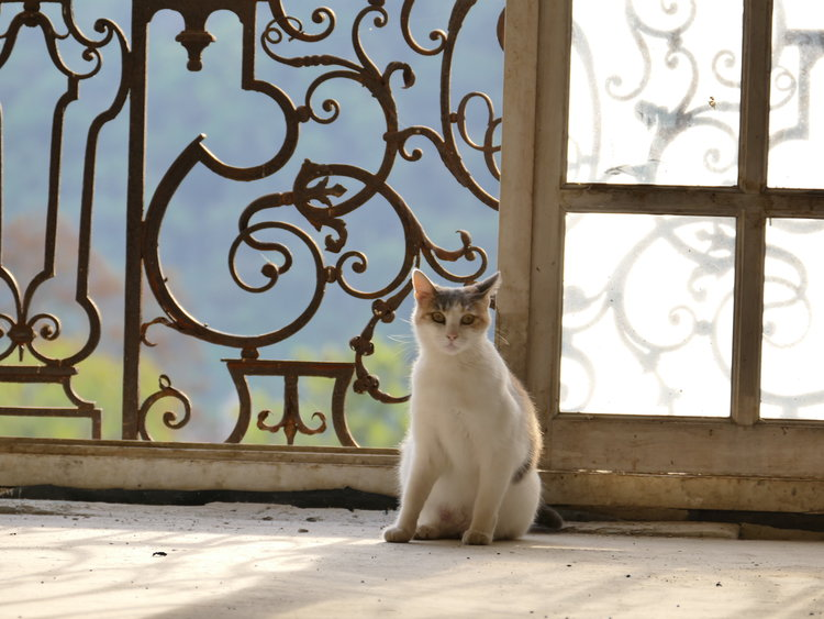 Antoinette had been living on her own in the Château for over ten years. We found her little kittens, one day, just after we bought the Château. Antoinette and three of her sons are now part of our family.