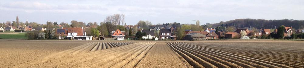 un paysan local a démarré le méridien dans le paysage le 21 mars 2015 : une ligne droite de trèfle blanc parmi les pommes de terre. pour l'instant des 'earthworks' or 'agricultural art'