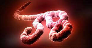 Ebola Virus By John Pereless Part 3.jpg