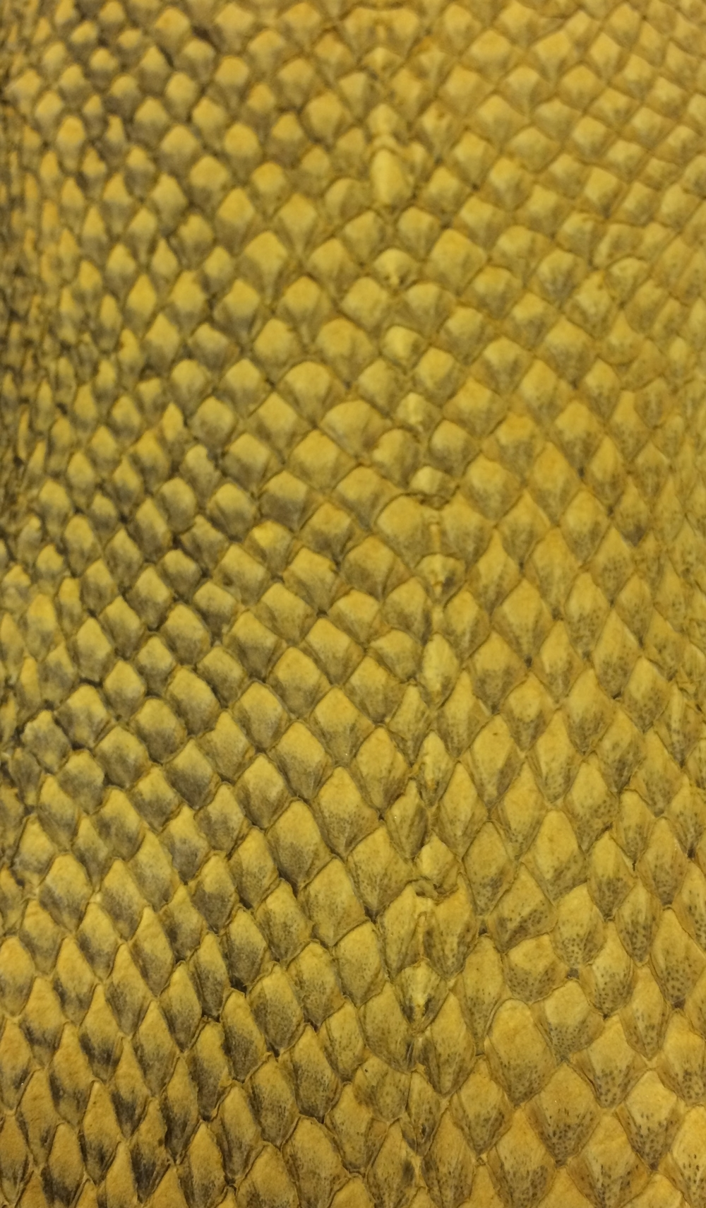 Salmon Leather - Yellow