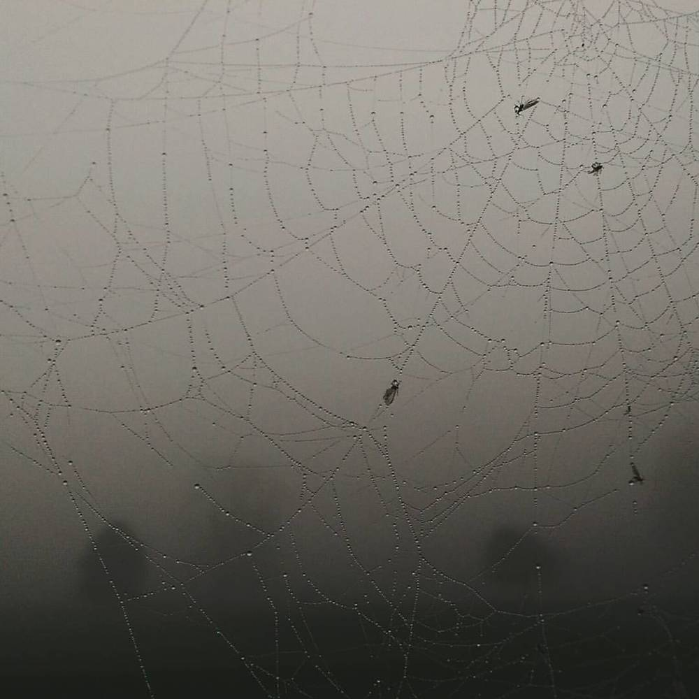 Absolutely in love with these foggy mornings ! #sombrescapes #spiderweb #fog #foggy #landscape #trees #nature #pretty #beautiful #history #nature #photooftheday #instagood #warm #view #silhouette #travel #instatravel #instago #instagood #trip #travelling #tourist #instapassport #instatraveling #mytravelgram #travelgram #igtravel #nofilter