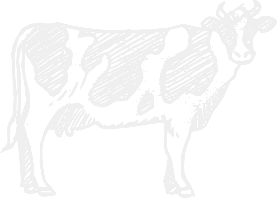 Milk Cow Png Cow bg Png