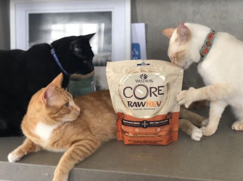 Photo credit: Wellness® Pet Food